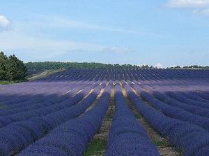 Private Provence Tour: Fontaine de Vaucluse and Isle sur Sorgue Photos