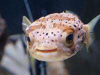 Explora Aquarium
