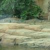 Pui Pui At Wetland Park