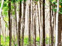 Pulau Kukup Johor National Park