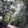 Pama Reserve