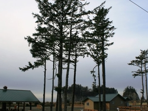 Quileute Oceanside Resort