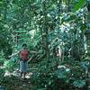 Rainforest At Niue