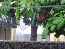 Rainy Season In Mayotte