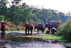 Rajaji Jungle Safaris And Elephant Rides