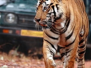 Golden Triangle with Ranthambore Tour Photos