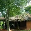 Rathva House