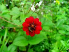 A Fly Feeding On A Red Flower