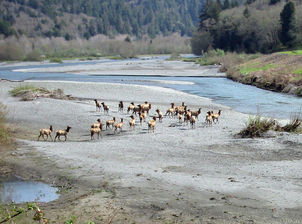 Redwood Creek (Humboldt County)