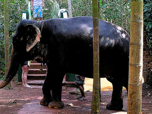 Private Eco-Tour: Crocodile Watching, Spice Plantation & Elephant Experience In Goa Photos