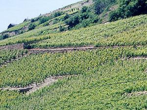 Rhone Valley Wine Tour from Avignon Photos