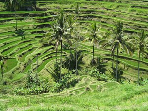 Ubud Day Trip Photos