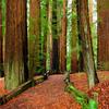 Richardson Grove State Park