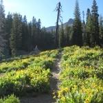Ridge Lakes Trail