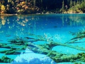 5 Days Chengdu Panda & Jiuzhaigou Flight Tour Photos