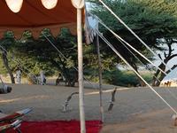 Royal Desert Safari Resort and Camp