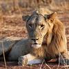 @ Ruaha National Park In Tanzania