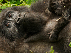 5 Days Rwanda Gorillas and Lake Kivu Tour Photos