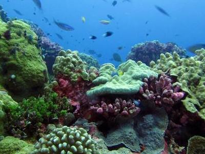 Phoenix Islands Protected Area, Kiribati Tourist Information