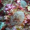 Sabah Semporna Scuba Diving