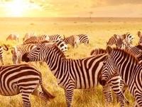 Tanzania Glamping Safari