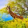 Safari In Tsavo West