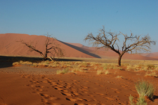 Safari Through Sossusvlei