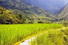 Sagada Rice Fields