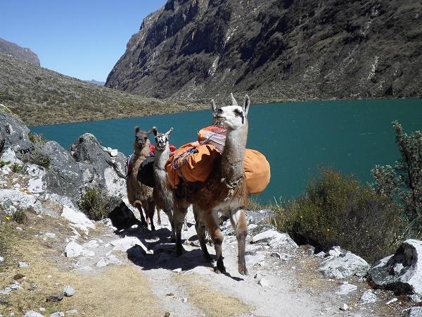 Hiking with Llamas, Santa Cruz - Vaqueria Photos