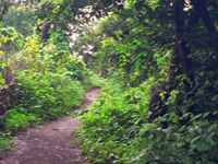 Sanjay Gandhi National Park Walking Trails