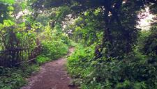 Sanjay Gandhi National Park Walking Trails