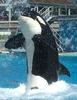 SD Orca Squirt