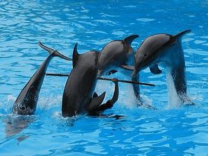 Seaalanya Dolphin Show Photos
