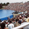 Seaworld San Diego Show