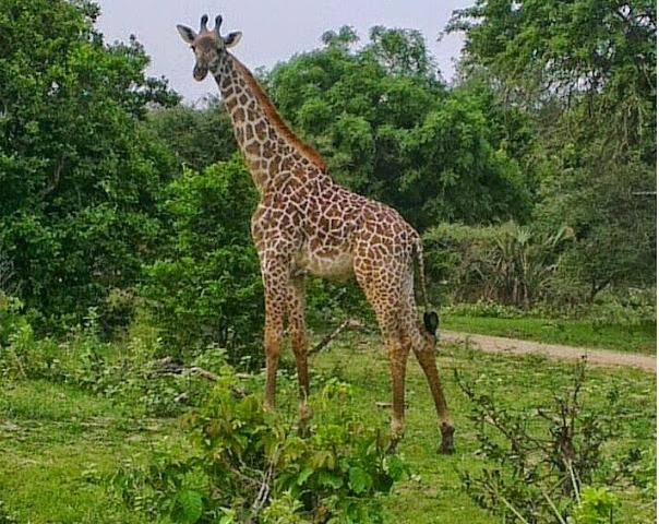 Selous and Zanzibar Safari Photos