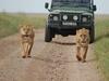 Northern Circuit Joining 7 Days Safari