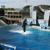 Shamu Exhibition In Sea World
