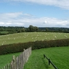 Sheep By Newgrange