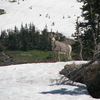 Sheep Mountain - Glacier - USA