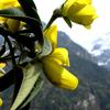 Shingba Rhododendron Sanctuary
