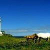 Shiriyazaki Lighthouse
