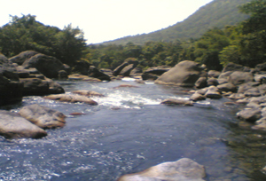 Silent Valley - Kuntipuzha River