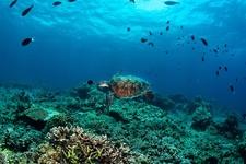 Sipadan Island - Malaysia