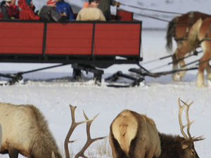 Yellowstone Winter Wonderland Special
