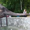 Slon Beogradski Zoo