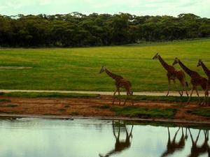 Small-Group Monarto Zoo Day Trip from Adelaide Photos