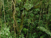 Soberania National Park