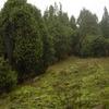 Sołokija Nature Reserve