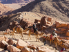South Sinai Camel Travel In Egypt