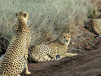 South Turkana National Reserve